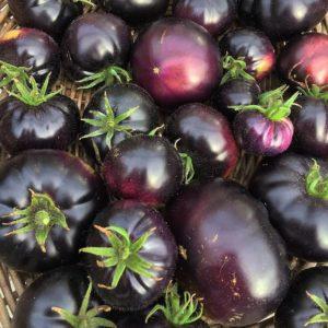 томат черный красавец