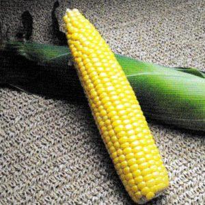 Кукуруза сладкая Акцентуэта