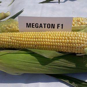 Кукуруза сладкая Мегатон F1