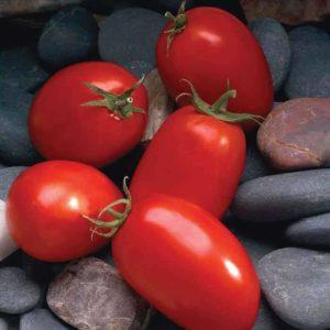 tomat_Mariana