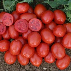 tomat_heinz